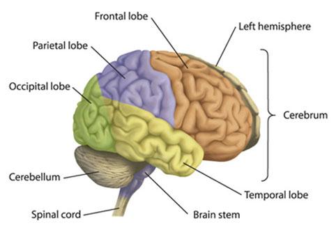 Gifford Neurology Institute